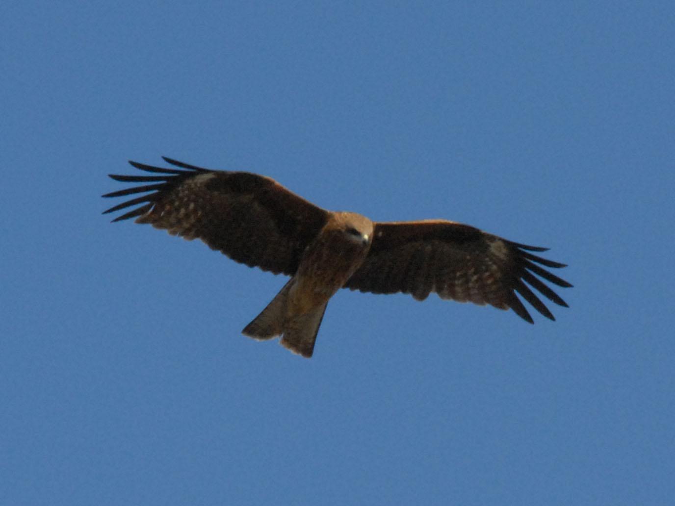 目標達成をはばむ障害は「鳥の目」で乗り越える